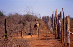 Itaberaba assentamento Itaguaçu '98 (24)_ridotto